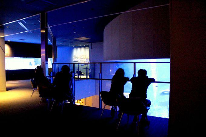 夜のすみだ水族館は人気のデートスポット