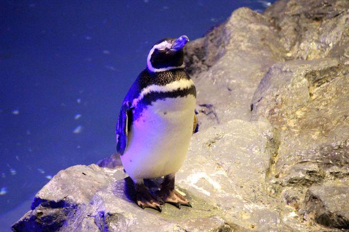 ペンギンウォッチングが楽しい!
