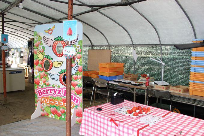 ベリーズファンのイチゴ狩りが特別なワケ