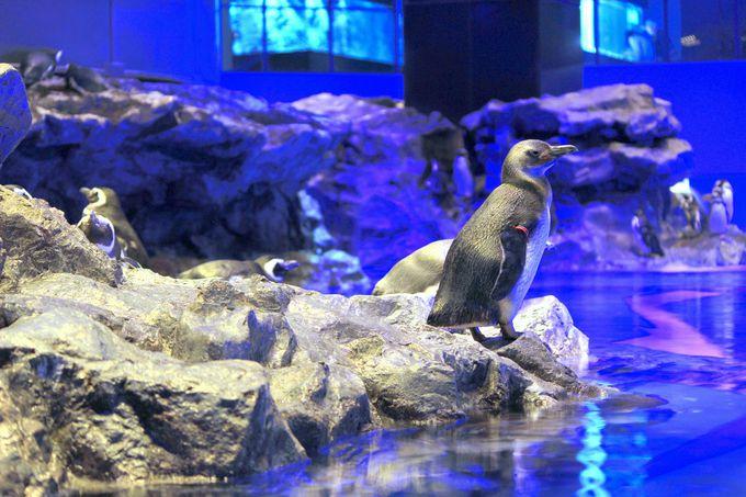 人間界の縮図みたいなペンギンたちの恋模様