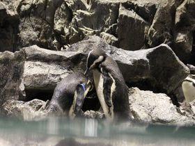 大切な人とのデートに!すみだ水族館「恋する水族館。Sweet Penguins」