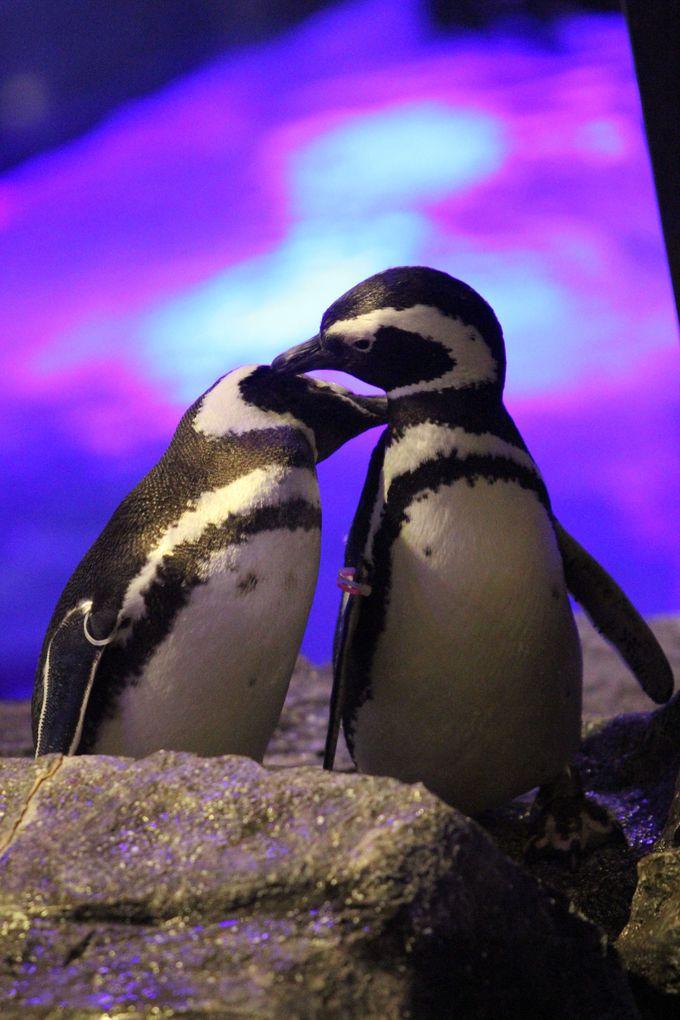 すみだ水族館のLoveLoveカップルをさがせ!