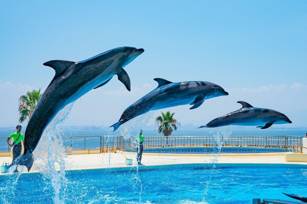 海が見えるショープールでイルカたちの見事なパフォーマンスを
