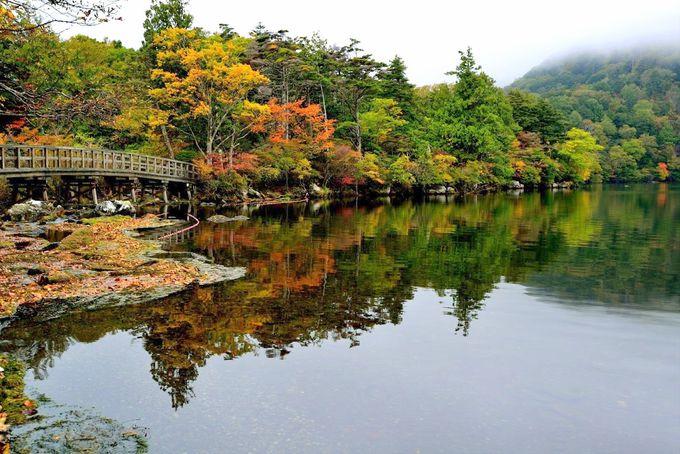 奥日光エリア(シーズン前半):湯元・戦場ヶ原・竜頭の滝の紅葉