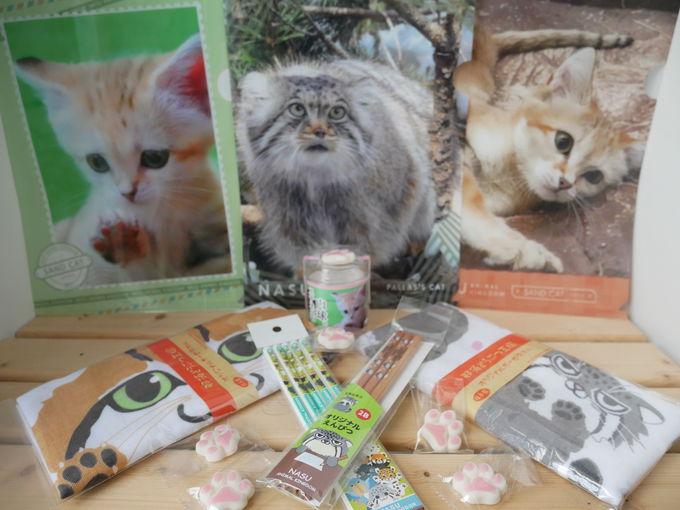 ランチやショッピングもネコ好き天国!