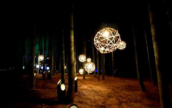 竹と光がコラボする幻想の世界