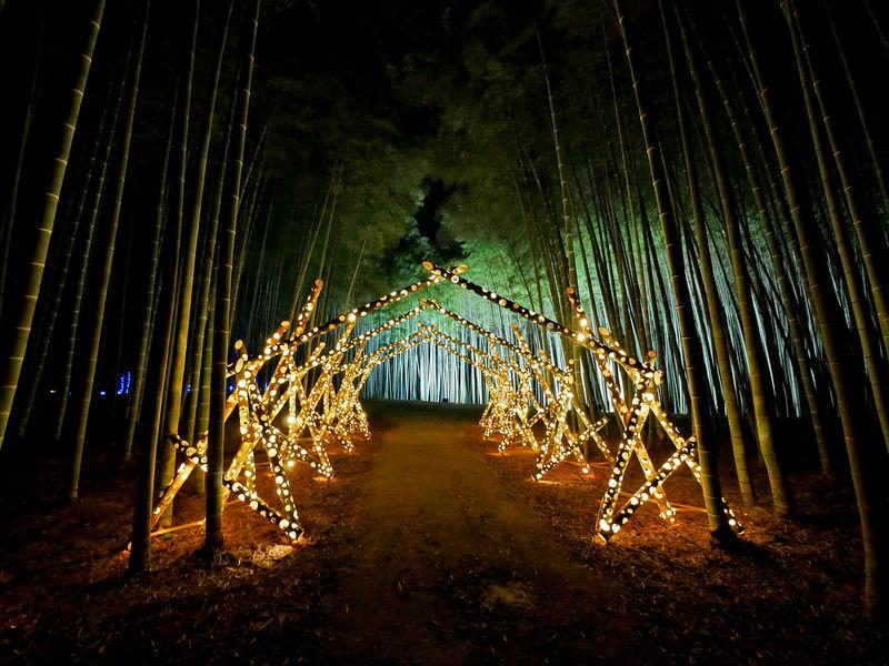 幻想の竹林!宇都宮「若竹の杜 若山農場」のライトアップが凄い!