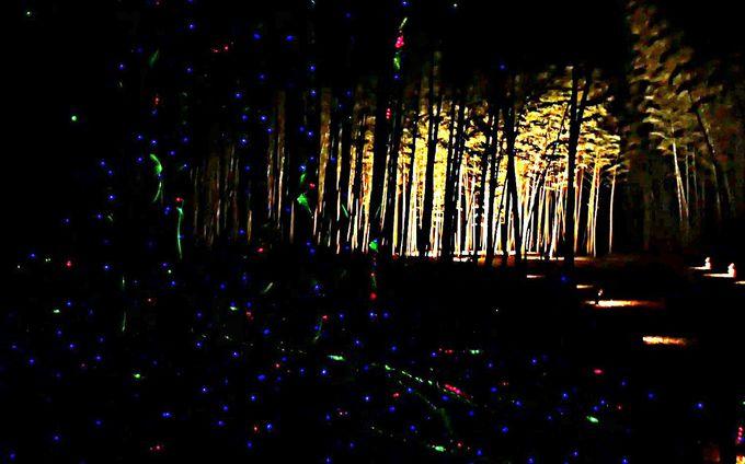 竹と光と戯れるプログラムも