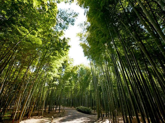 東京ドーム約5個分!広大な竹の農場「若竹の杜 若山農場」