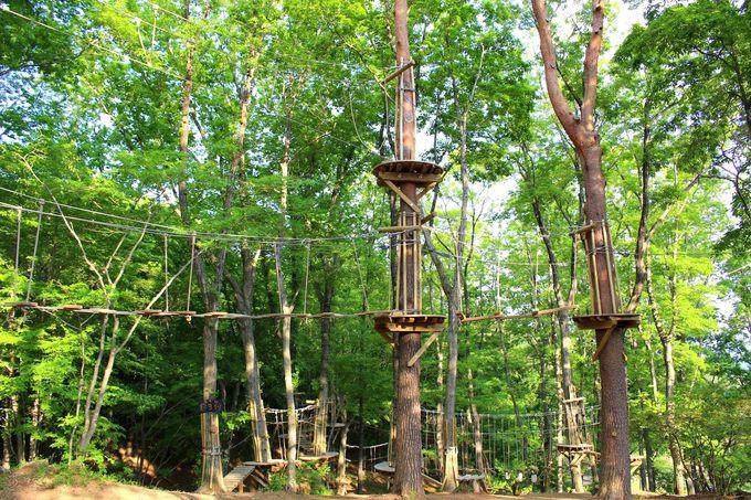 あの施設が入場無料!「TOWAピュアコテージ」で森と遊ぶ