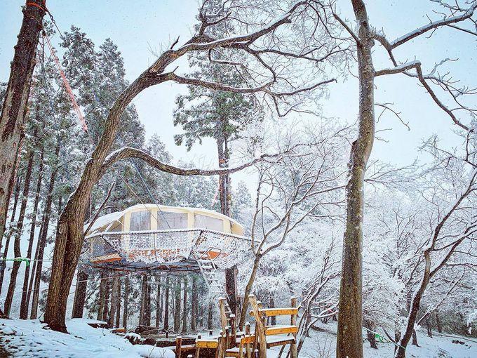白銀の森に浮かぶ冬キャンプもおすすめ!