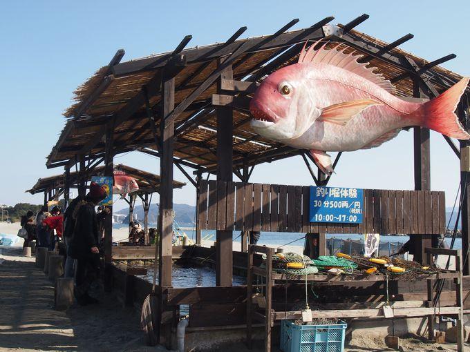 鳴門鯛も釣れる!?「アオアヲナルトリゾート」