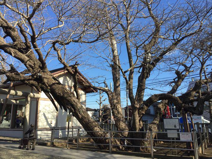 浦安最古の神社「豊受神社」