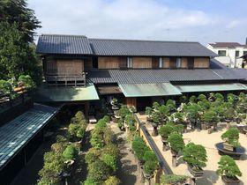 世界でも人気の盆栽の名所!江戸川区「春花園BONSAI美術館」
