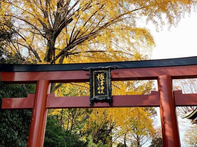 谷根千の総鎮守「根津神社」