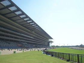 レースだけじゃ勿体ない!施設が充実すぎる東京競馬場の魅力