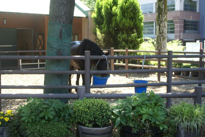 パドックだけじゃない!馬と間近で触れ合える隠れスポット!