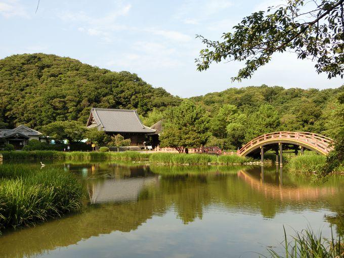太鼓橋と水面のコントラスト。本堂と浄土式庭園