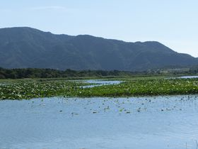 国内最大級の砂丘湖!水面積はなんとすべて湧き水!佐潟