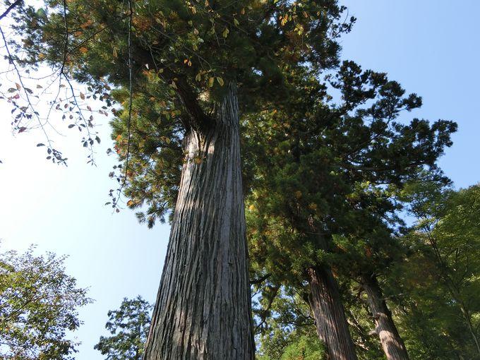 巨木が垂直にそびえ立つ日枝神社。子孫繁栄の祈願なら此処