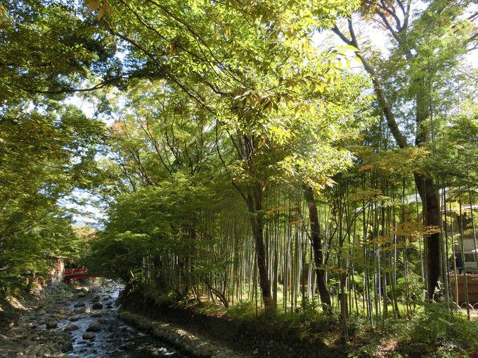 桂川に沿うように延びる竹林の小径。早朝の散策は幻想の世界