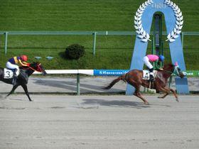 馬の鼓動を間近で感じよう!日本最大の広さを誇る盛岡競馬場