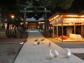 参拝者は歴史上の人物がずらり!自然のパワーみなぎる「平塚八幡宮」