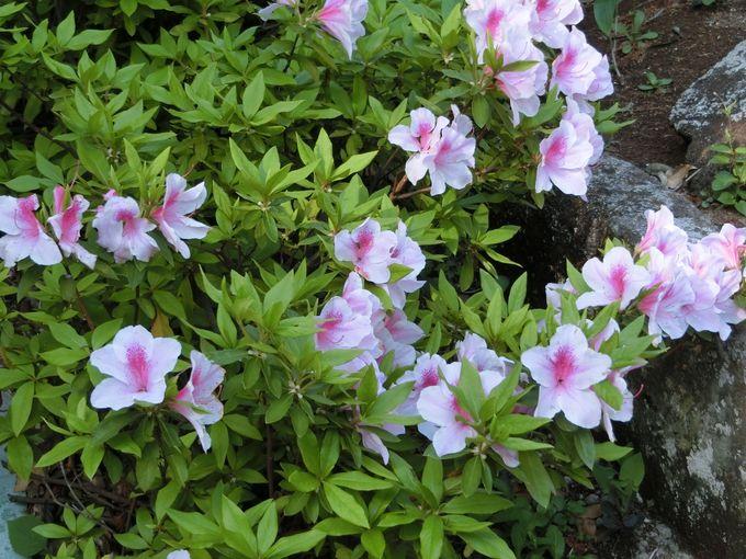 小径の先には…?住民の憩いの場所に残る豊かな自然と四季の花々