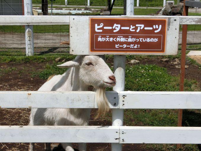癒し系動物が大集合!「ふれあい動物村」の愛くるしい仲間達