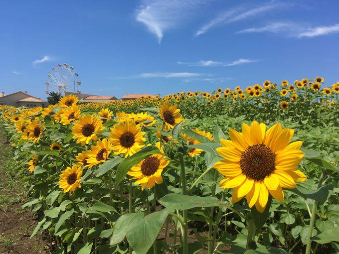 10万本の花々が咲き誇るエントランス!農園やキャンプ場で「非日常」を満喫