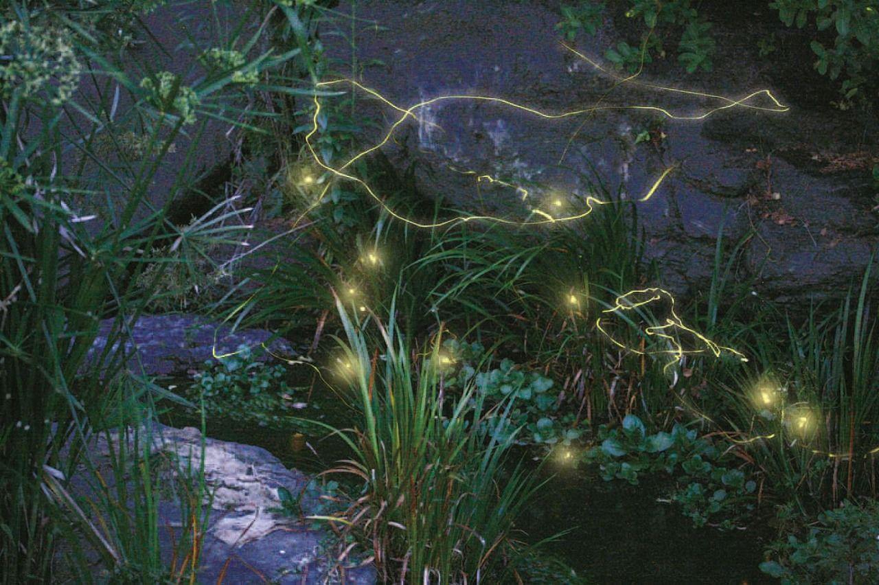 自然は優しい。ソレイユの丘でみんなが「癒し」を実感する訳