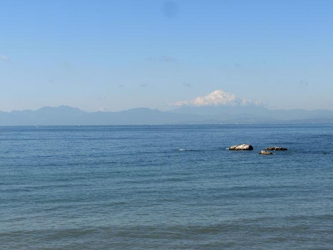 富士の絶景と貴重な海浜植物に触れる