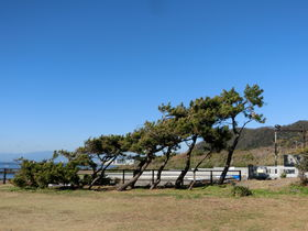 神奈川「葉山公園」で旧御用邸跡地を満喫!浜風にめげない松も必見