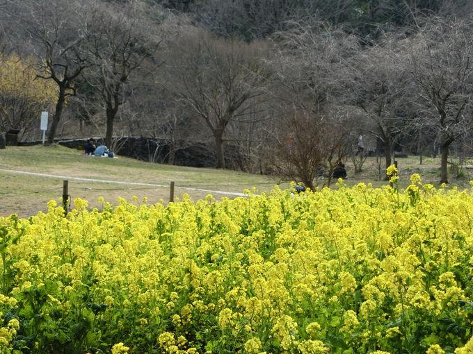 県花の「ヤマユリ」は必見!春夏秋冬の花々が楽しめる