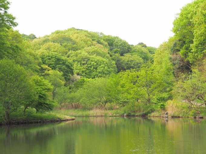 静寂に包まれた里山。貴重な品種の樹々を鑑賞!