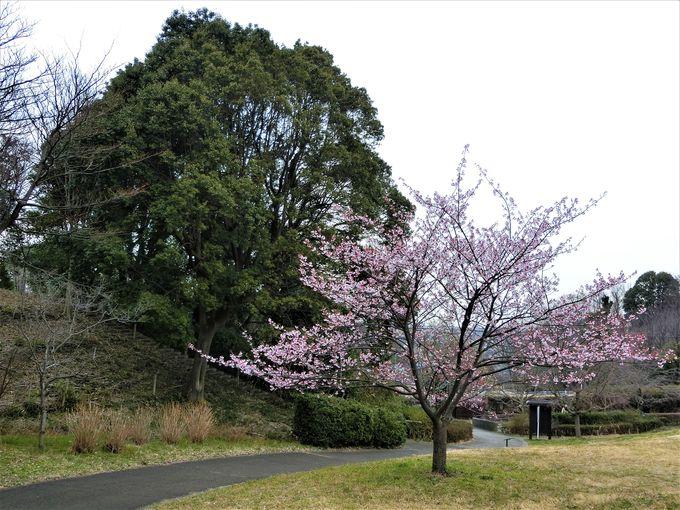 自然の恵みと季節の移ろいを楽しむ。秋に咲くサクラも!