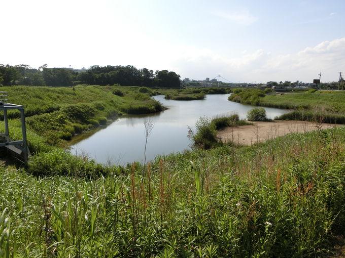 水没の可能性有り?遊水地を活用した自然環境再生への取組み