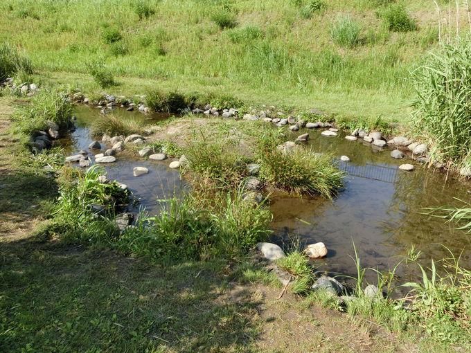 ビオトープで環境保全!生き物たちに欠かせない水の力