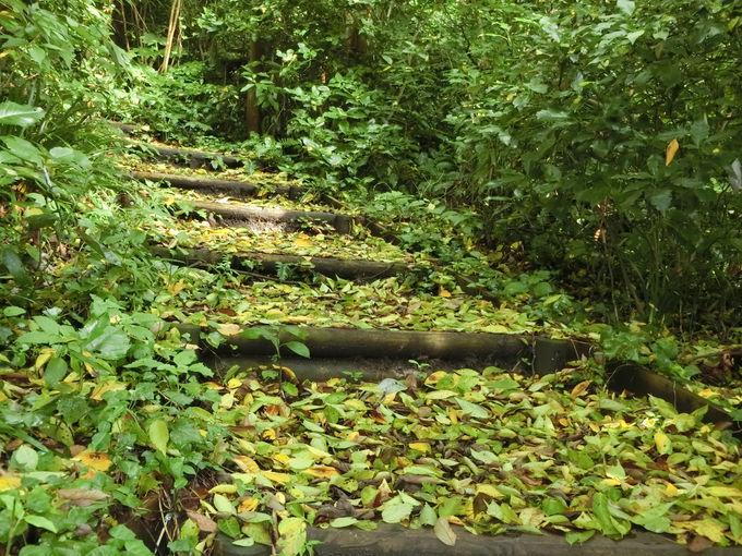 地味にきつい急勾配の階段!杜が創る天然アートに癒される