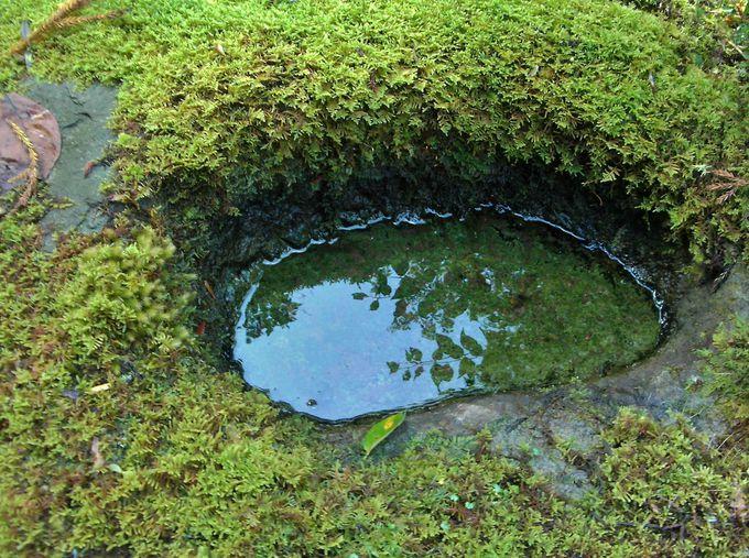 白山神社の境内 そこは緑いっぱいの別世界