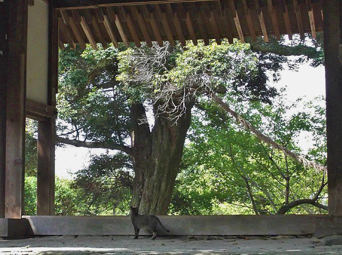 第四番長岳寺はのんびりムードのお寺!