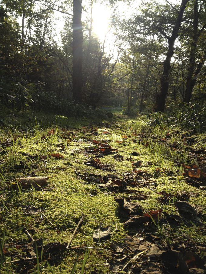 エゾジカやキタキツネが姿を見せる「ふるさとの森」。