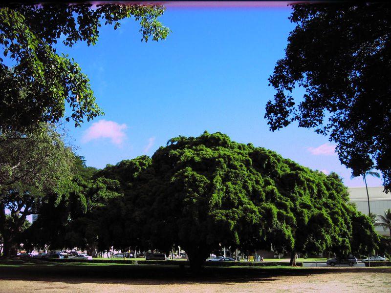 ここにも「気になる木」?超穴場!ワイキキから約20分 アクセス良好の癒し公園とホノルル美術館