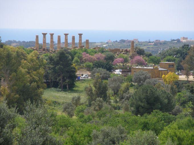 国立考古学博物館前から見渡せる神殿の谷