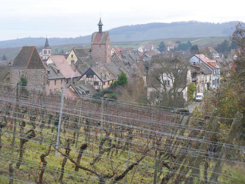 村の周囲は隣村まで続く広大な葡萄畑!