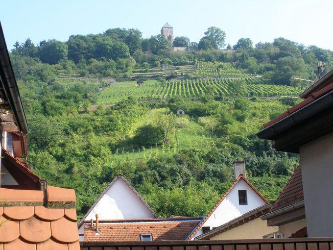 葡萄畑の広がる小高い山にはシュタルケンブルク城