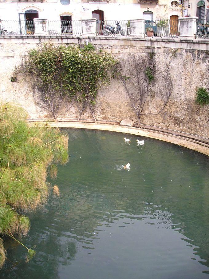 パピルスが茂るアレトゥーザの泉