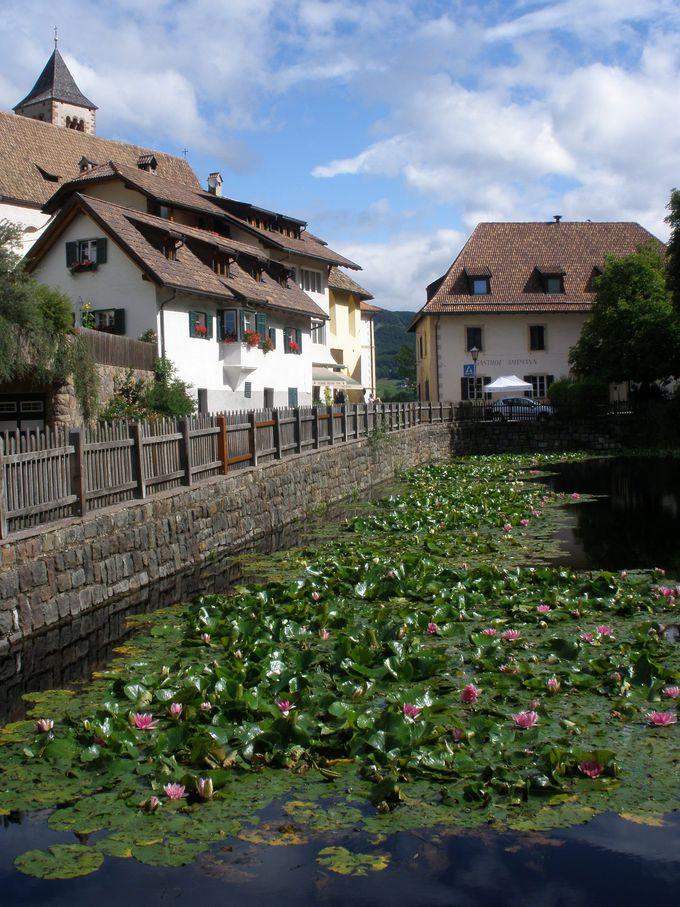 夏なら色とりどりのお花や睡蓮の花咲く池のコラッボの町並み