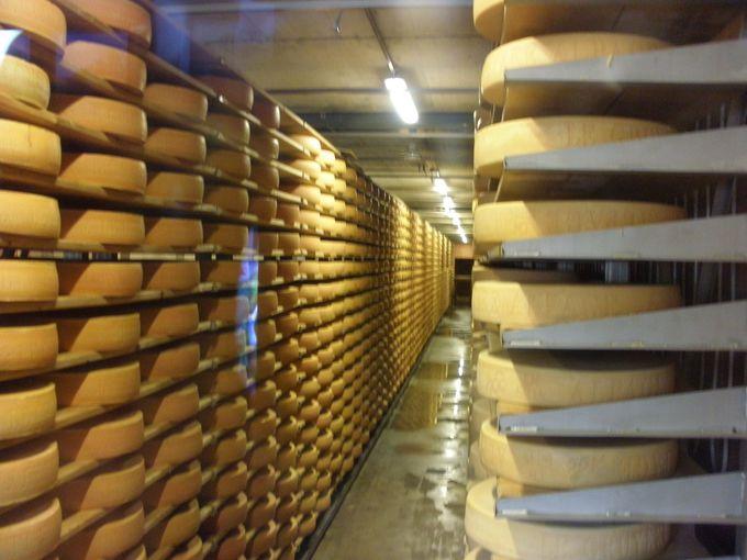 チーズ作り実演製造所で見学