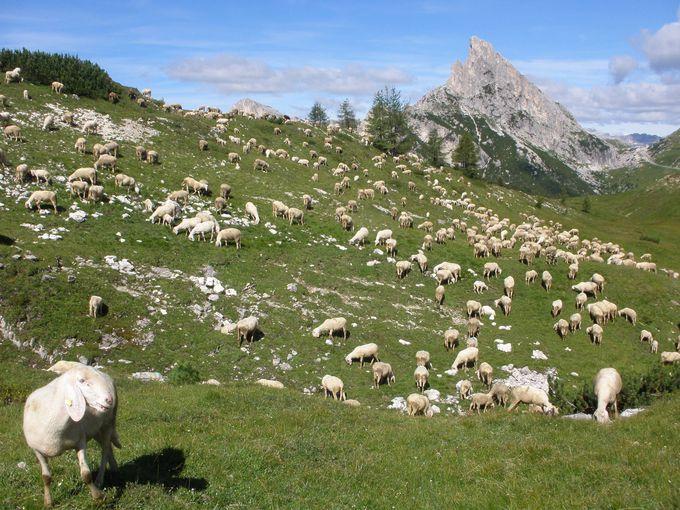 ファルツァレーゴ峠からハイキング